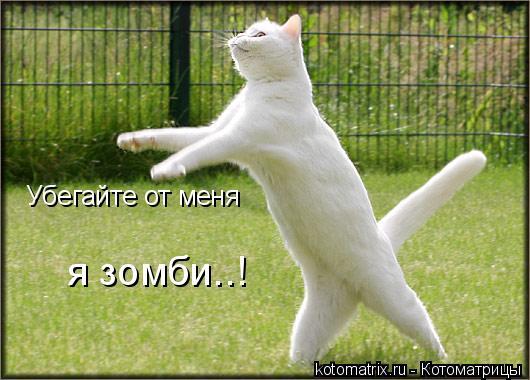 Котоматрица: Убегайте от меня я зомби..!