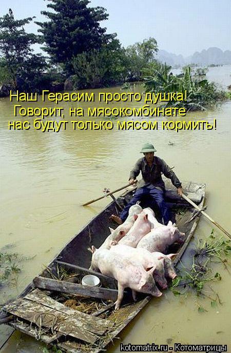 Котоматрица: Наш Герасим просто душка! Говорит, на мясокомбинате нас будут только мясом кормить!