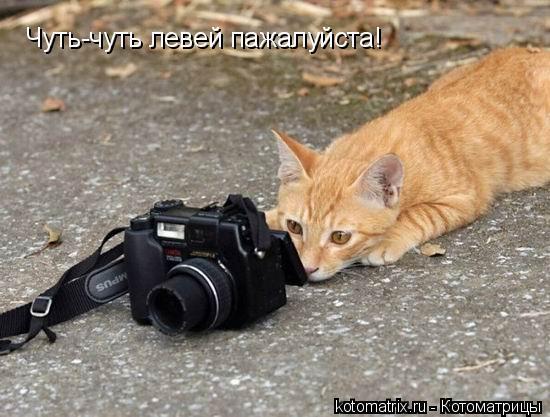 Котоматрица: Чуть-чуть левей пажалуйста!