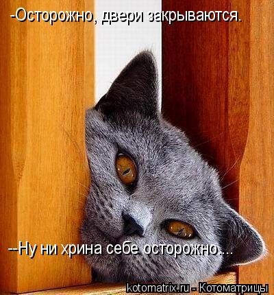 Котоматрица: -Осторожно, двери закрываются. --Ну ни хрина себе осторожно....