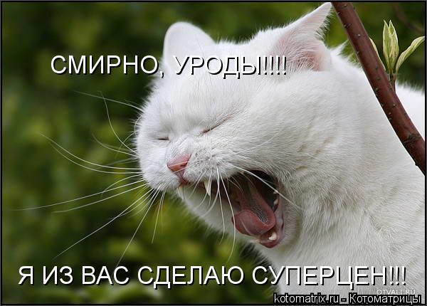 Котоматрица: СМИРНО, УРОДЫ!!!! Я ИЗ ВАС СДЕЛАЮ СУПЕРЦЕН!!!