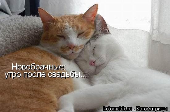 Котоматрица: Новобрачные: утро после свадьбы...