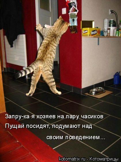 Котоматрица: Запру-ка я хозяев на пару часиков Пущай посидят, подумают над  своим поведением...