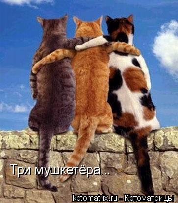Котоматрица: Три мушкетёра...
