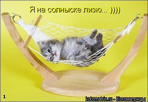 Котоматрица: Я на солныске лизю... ))))