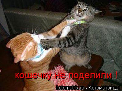Котоматрица: кошечку не поделили !