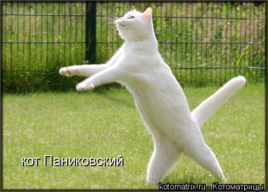 Котоматрица: кот Паниковский
