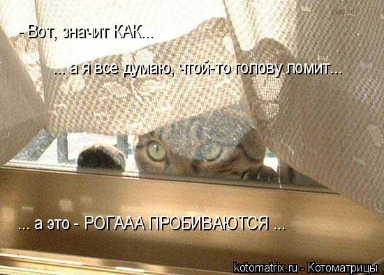 Котоматрица: - Вот, значит КАК...  ... а я все думаю, чтой-то голову ломит... ... а это - РОГААА ПРОБИВАЮТСЯ ...
