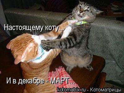 Котоматрица: Настоящему коту... И в декабре - МАРТ...