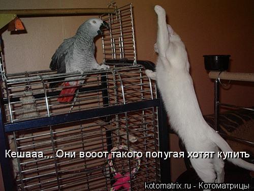 Котоматрица: Кешааа... Они вооот такого попугая хотят купить