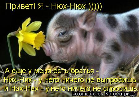 Котоматрица: Привет! Я - Нюх-Нюх ))))) А еще у меня есть братья - Них-Них - у него ничего не выпросишь и Нах-Нах - у него ничего не спросишь...