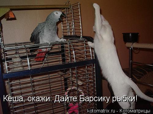 Котоматрица: Кеша, скажи: Дайте Барсику рыбки!