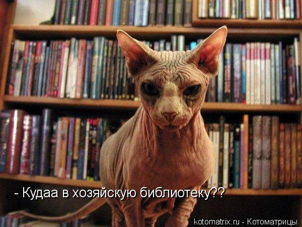 Котоматрица: - Кудаа в хозяйскую библиотеку??