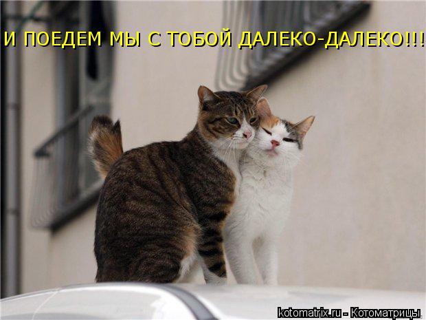 Котоматрица: И ПОЕДЕМ МЫ С ТОБОЙ ДАЛЕКО-ДАЛЕКО!!!