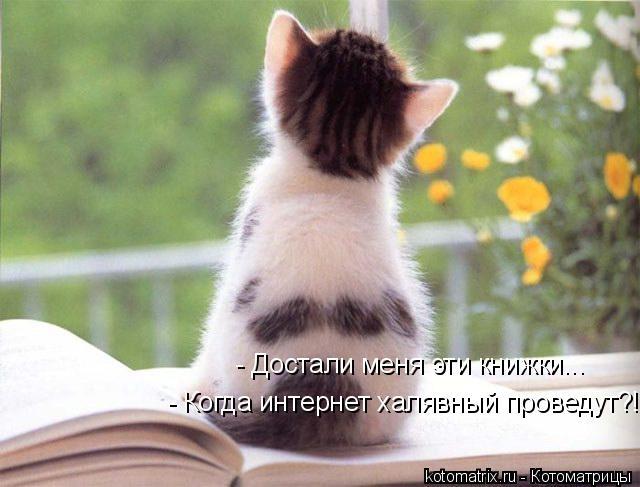Котоматрица: - Достали меня эти книжки... - Когда интернет халявный проведут?!