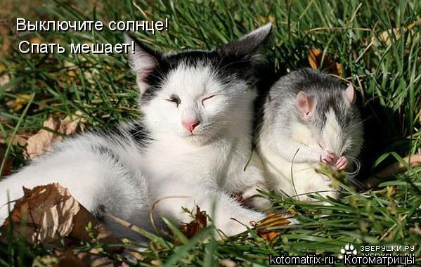 Котоматрица: Выключите солнце! Спать мешает!