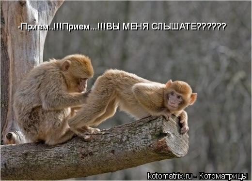 Котоматрица: -Прием..!!!Прием...!!!ВЫ МЕНЯ СЛЫШАТЕ??????