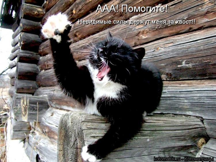 Котоматрица: ААА! Помогите!  Невидимые силы держут меня за хвост!!