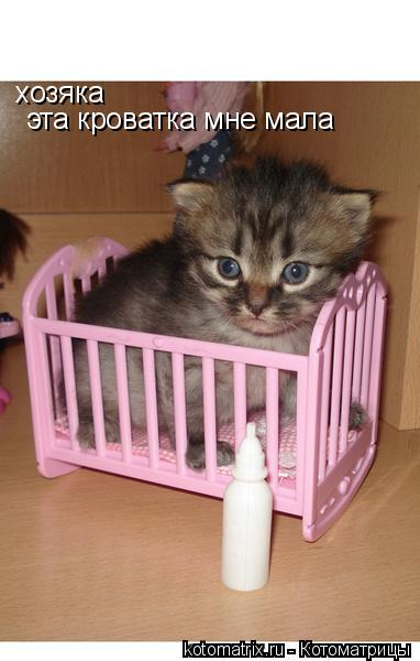 Котоматрица: хозяка эта кроватка мне мала