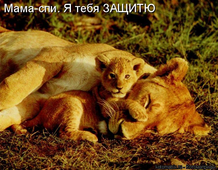 Котоматрица: Мама-спи. Я тебя ЗАЩИТЮ