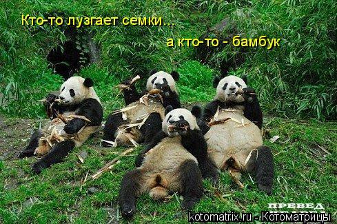 Котоматрица: Кто-то лузгает семки... а кто-то - бамбук