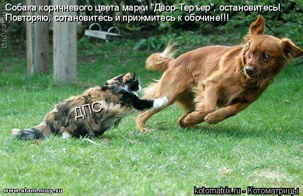 """Котоматрица: ДПС Собака коричневого цвета марки """"Двор-Теръер"""", остановитесь!  Повторяю, сотановитесь и прижмитесь к обочине!!!"""