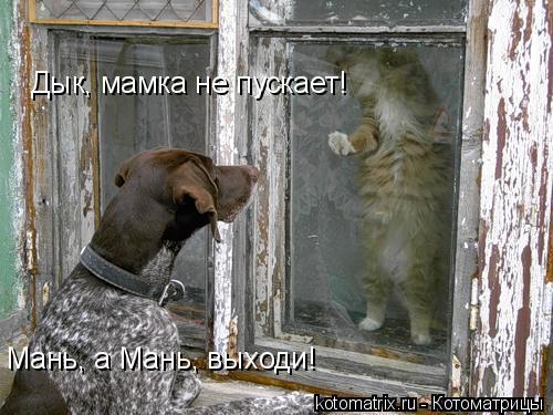 Котоматрица: Мань, а Мань, выходи! Дык, мамка не пускает!