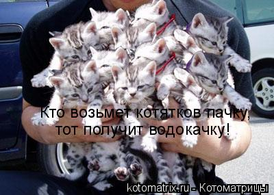 Котоматрица: Кто возьмет котятков пачку, тот получит водокачку!