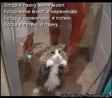 Котоматрица: Когда я пахну, меня моют. Когда меня моют, я нервничаю. Когда я нервничаю, я потею. Когда я потею, я пахну....