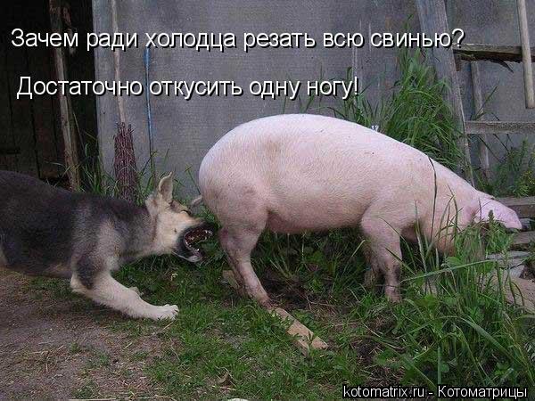 Котоматрица: Зачем ради холодца резать всю свинью? Достаточно откусить одну ногу!