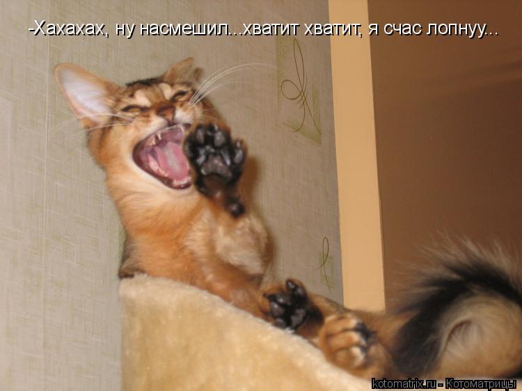 Котоматрица: -Хахахах, ну насмешил...хватит хватит, я счас лопнуу...