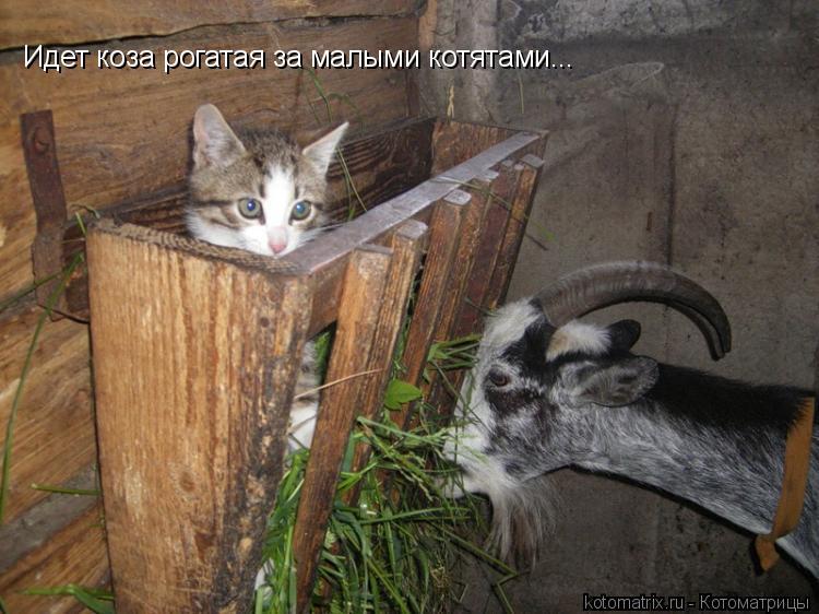 Котоматрица: Идет коза рогатая за малыми котятами...