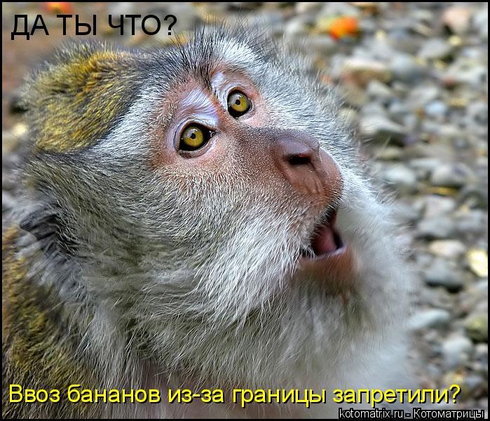 Котоматрица: ДА ТЫ ЧТО? Ввоз бананов из-за границы запретили?