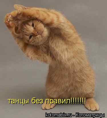 Котоматрица: танцы без правил!!!!!!!