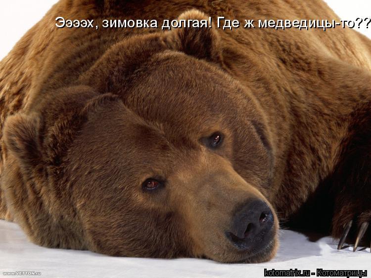 Котоматрица: Ээээх, зимовка долгая! Где ж медведицы-то???