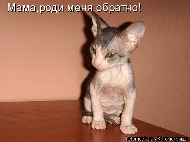 Котоматрица: Мама,роди меня обратно!