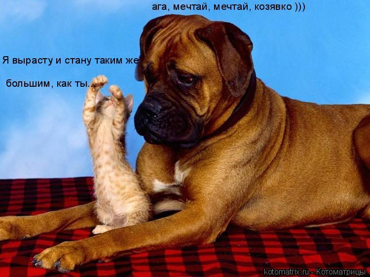 Котоматрица: большим, как ты... Я вырасту и стану таким же  ага, мечтай, мечтай, козявко )))