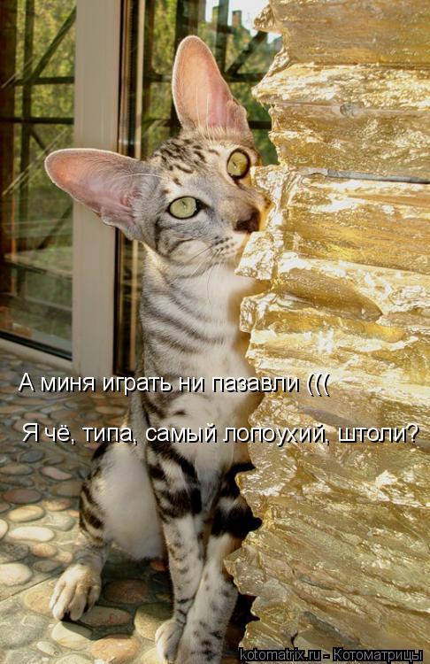 Котоматрица: А миня играть ни пазавли ((( Я чё, типа, самый лопоухий, штоли?