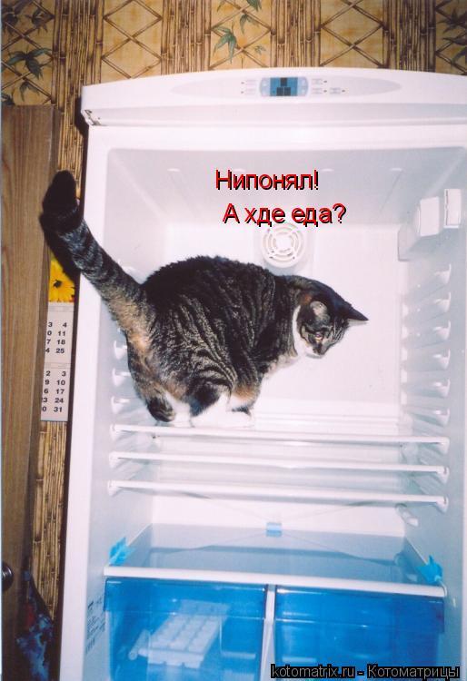 Котоматрица: Нипонял! А хде еда?