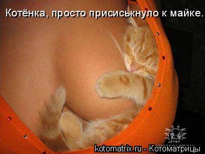 Котоматрица: Котёнка, просто присиськнуло к майке.