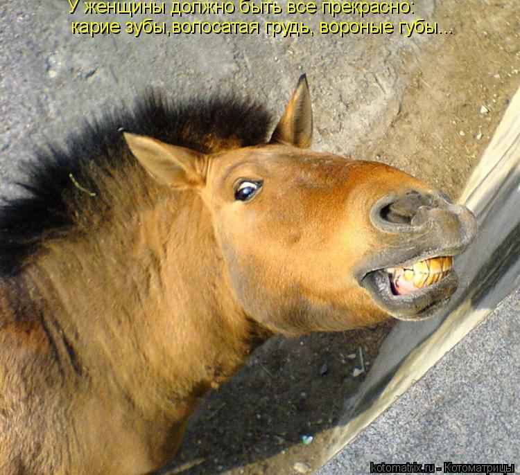 Котоматрица: У женщины должно быть все прекрасно:  карие зубы,волосатая грудь, вороные губы...