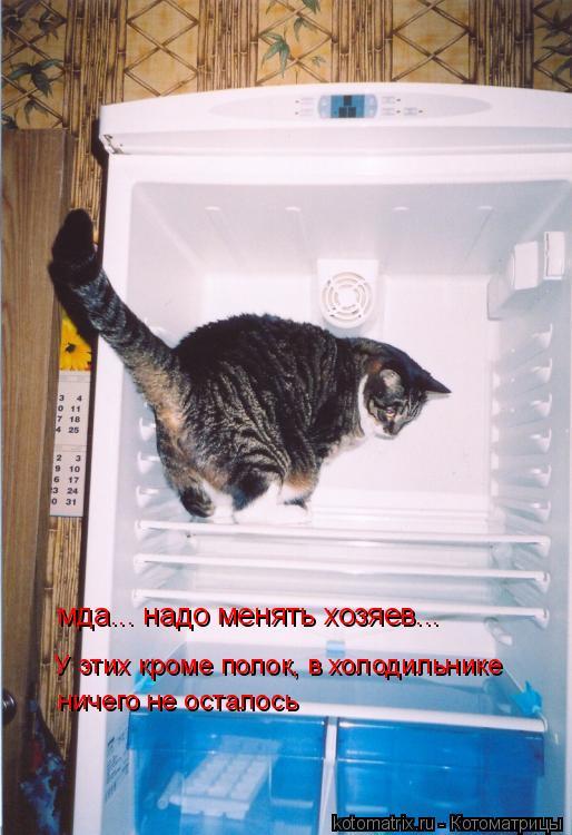 Котоматрица: У этих кроме полок, в холодильнике  ничего не осталось мда... надо менять хозяев...