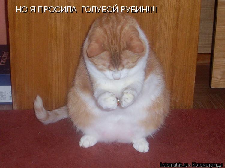 Котоматрица: НО Я ПРОСИЛА  ГОЛУБОЙ РУБИН!!!!