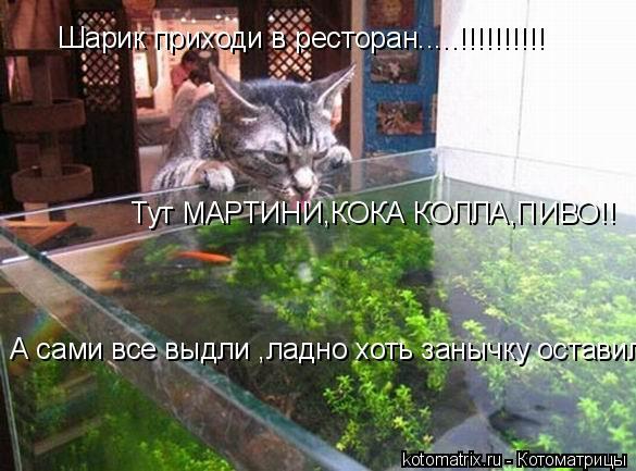 Котоматрица: Шарик приходи в ресторан.....!!!!!!!!!! Тут МАРТИНИ,КОКА КОЛЛА,ПИВО!! А сами все выдли ,ладно хоть занычку оставил........!!!