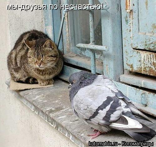 Котоматрица: мы-друзья по несчастью!