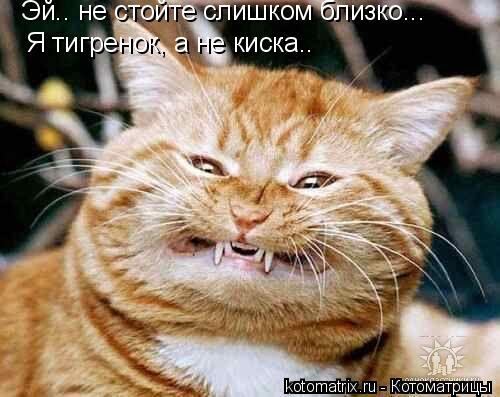 Котоматрица: Эй.. не стойте слишком близко... Я тигренок, а не киска..