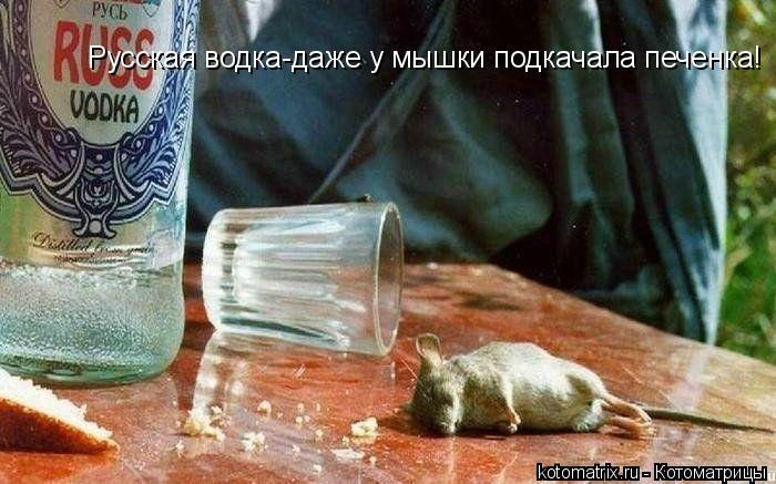 Котоматрица: Русская водка-даже у мышки подкачала печенка!