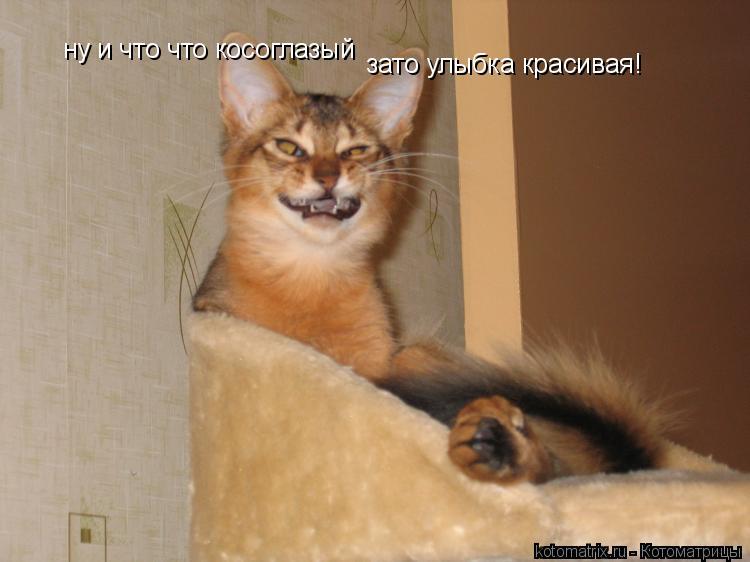 Котоматрица: ну и что что косоглазый зато улыбка красивая!