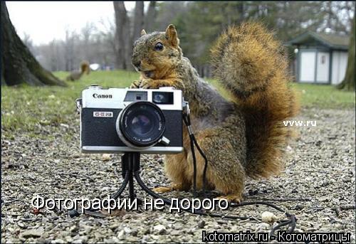 Котоматрица: Фотографии не дорого