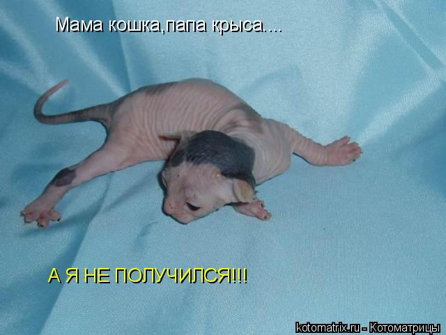 Котоматрица: Мама кошка,папа крыса.... А Я НЕ ПОЛУЧИЛСЯ!!!